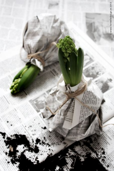bloembollen-in-huis-krantenpapier