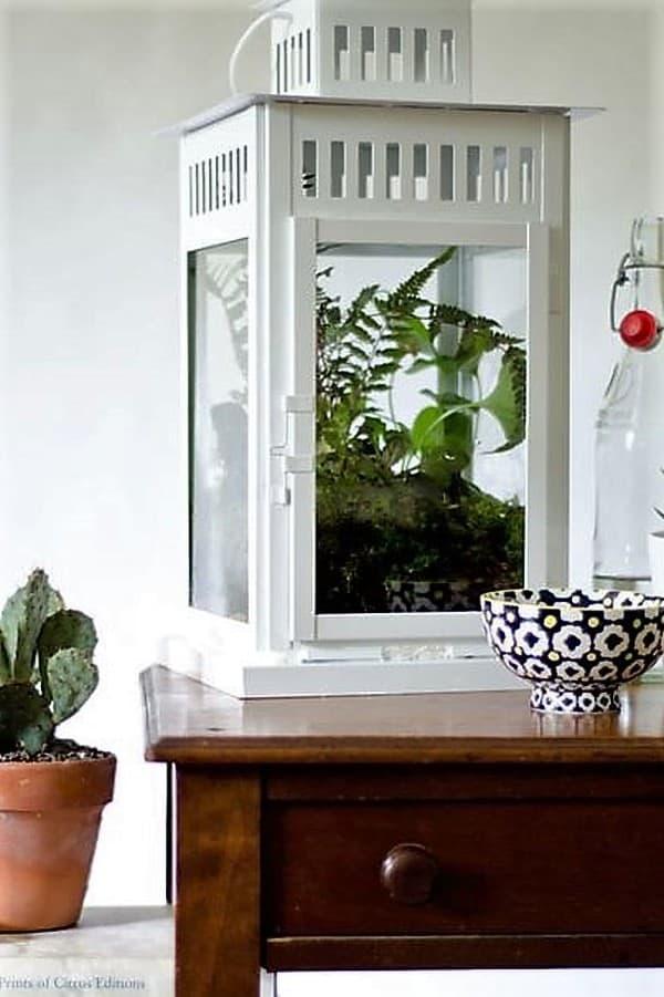 IKEA hacks Borrby terrarium