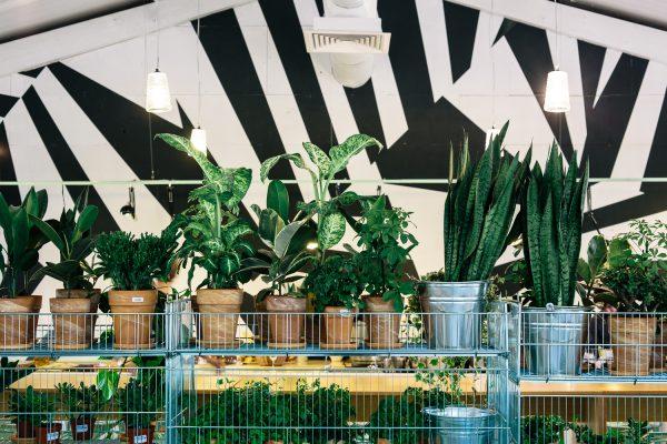 bakkerij-urban-jungle