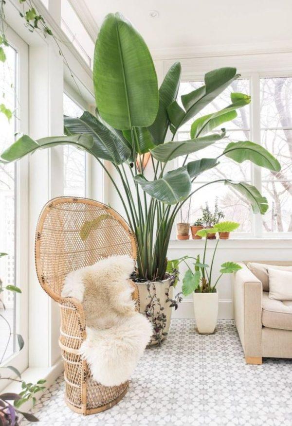 bananen plant