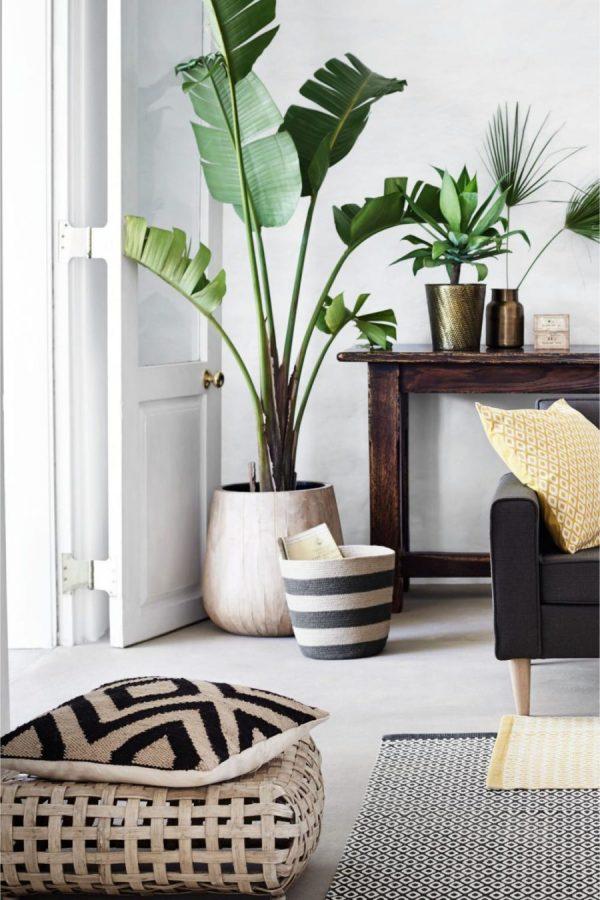 bananenplant top10-planten