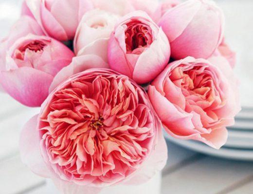 bloemen huis