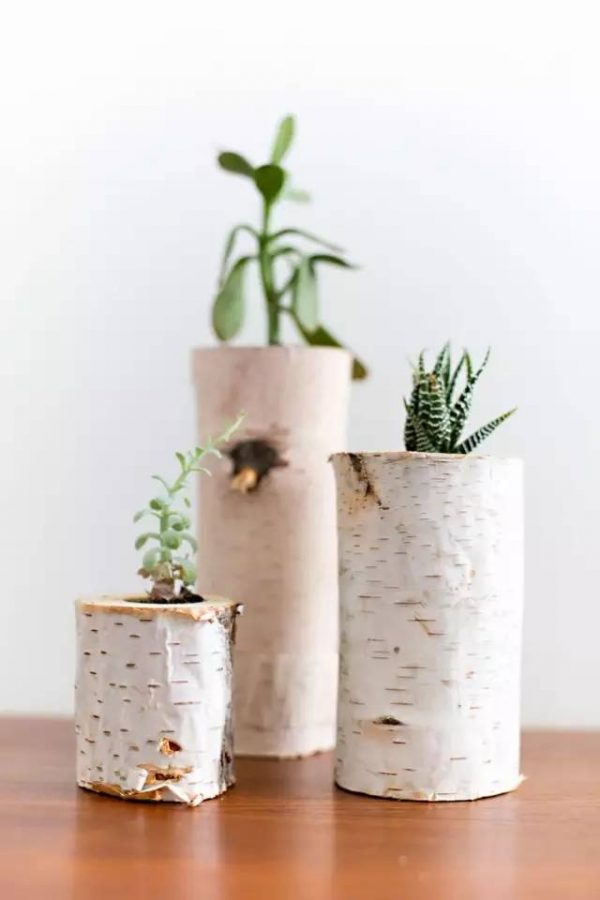 boomstam plant potje