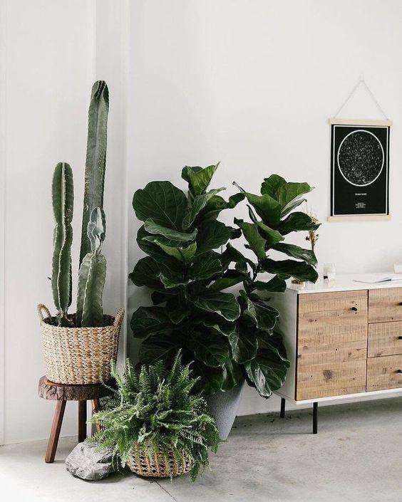 Cactus in mand