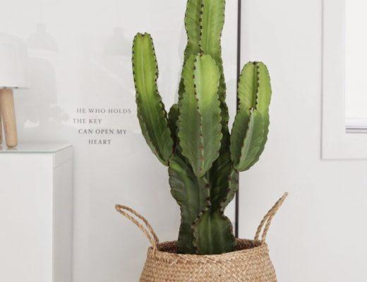 cactus mand