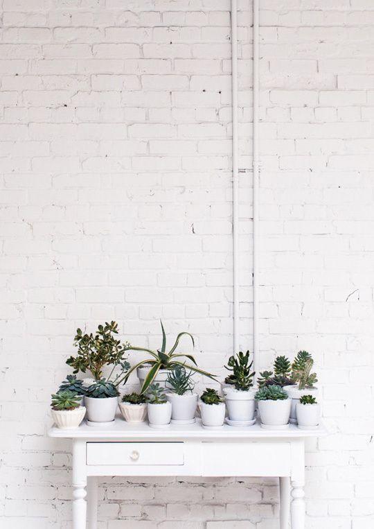 decoratie cactussen