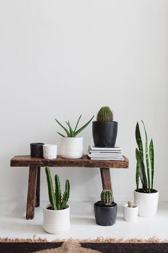 Decoratief bankje stylen met planten