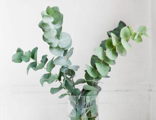 eucalyptus interieur