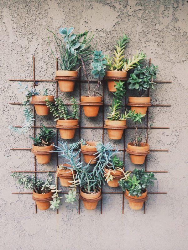 gaas tuin potten planten