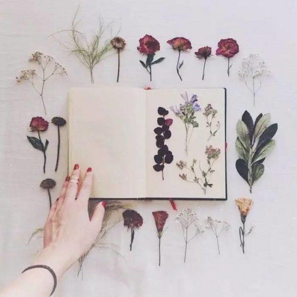 gedroogde bloemen interieur