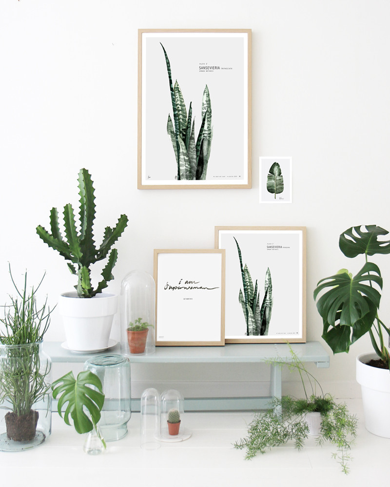 Cactus inspiratie thestylebox - Exterieur decoratie ...