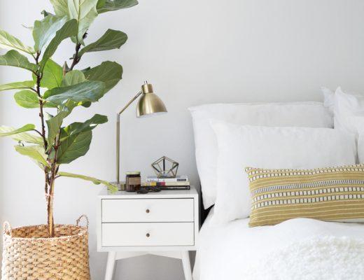 grote plant slaapkamer