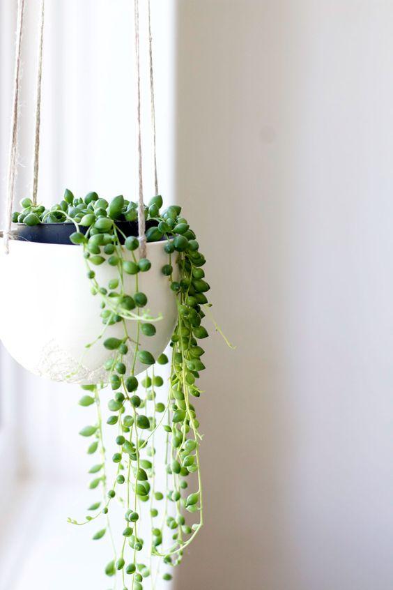 hangplant erwtenplant