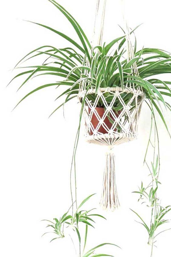 hangplant graslelie