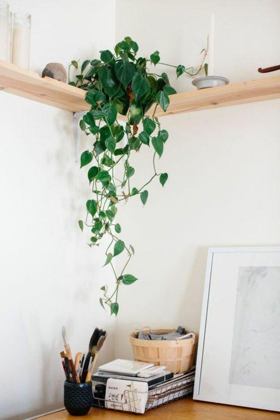 hangplant pothos
