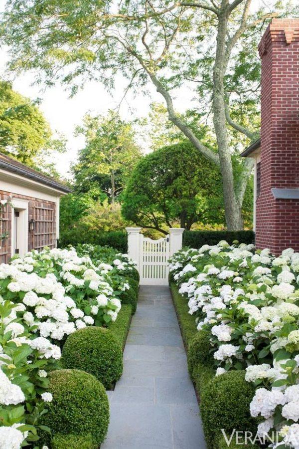 Hortensia in de tuin thestylebox for Hamptons home and garden design penarth