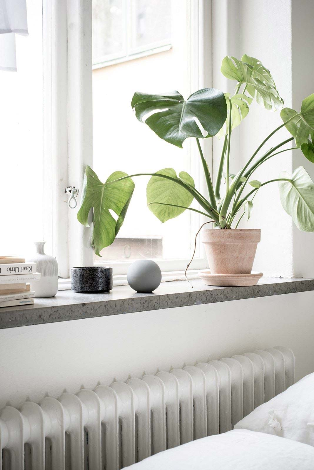 housewarming cadeau idee plant