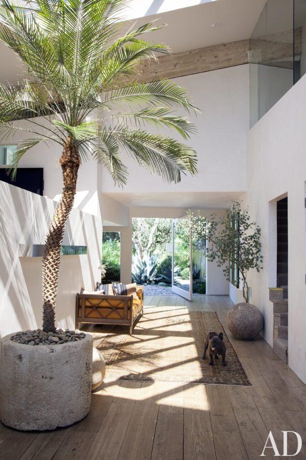 indoor palmboom