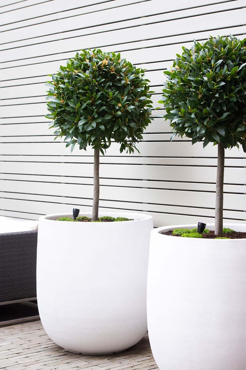 intieme moderne tuin grote plantenpotten wit