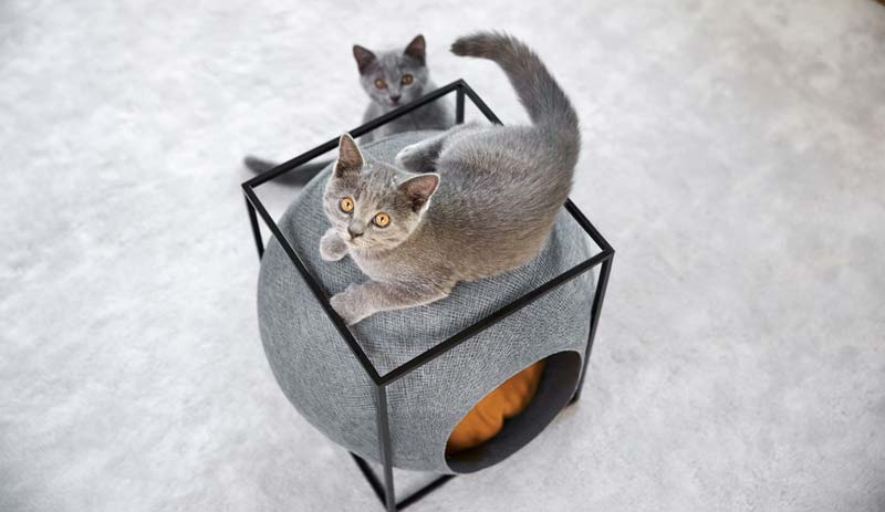 meyou the cube kattenhuis
