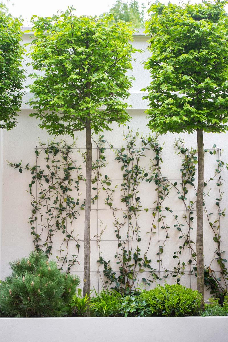 moderne intieme tuin buxus bomen verhoogde plantenborder