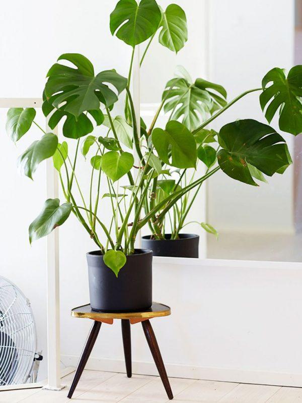 monsterplant interieur