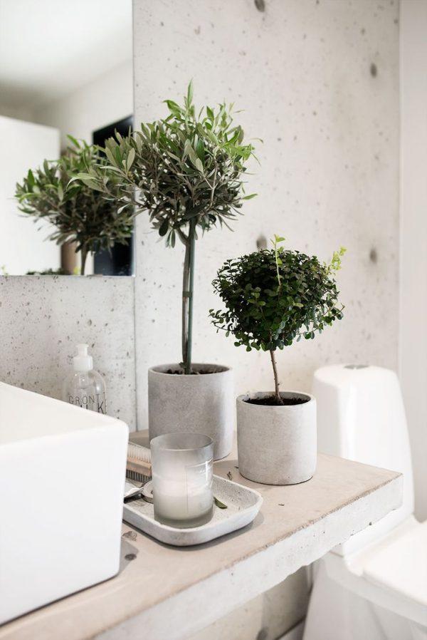 olijfboom plant badkamer