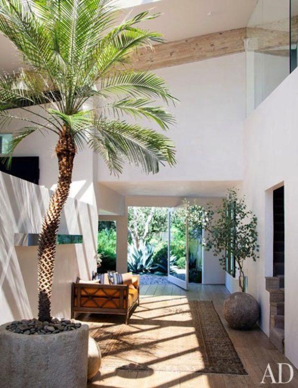palmboom top10 planten