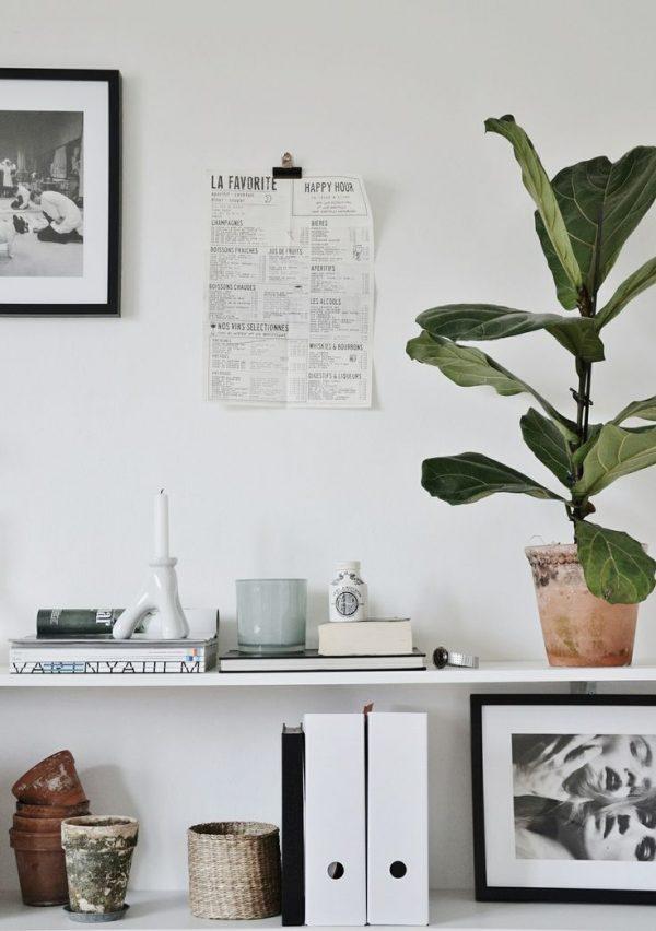 plankje plant