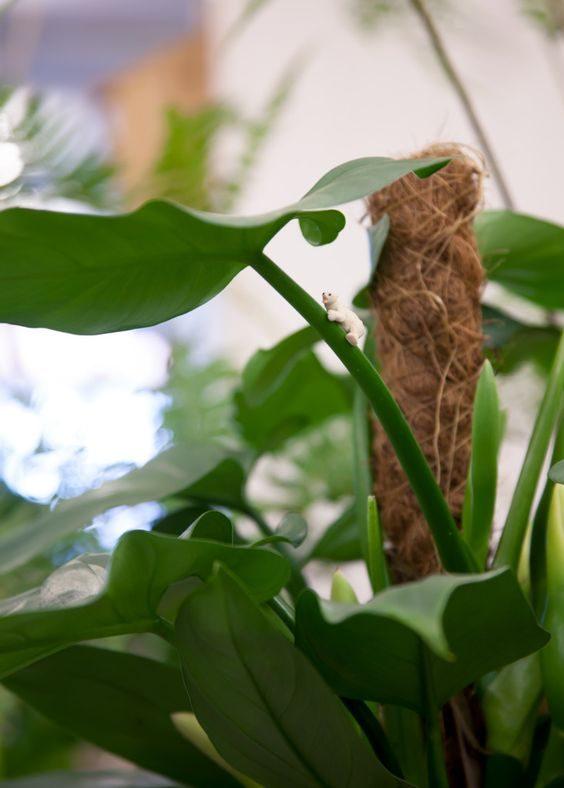 plantaardig-middelburg