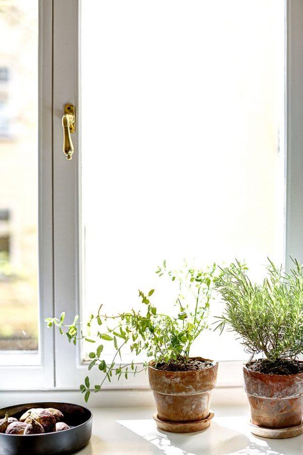 planten binnenkijker