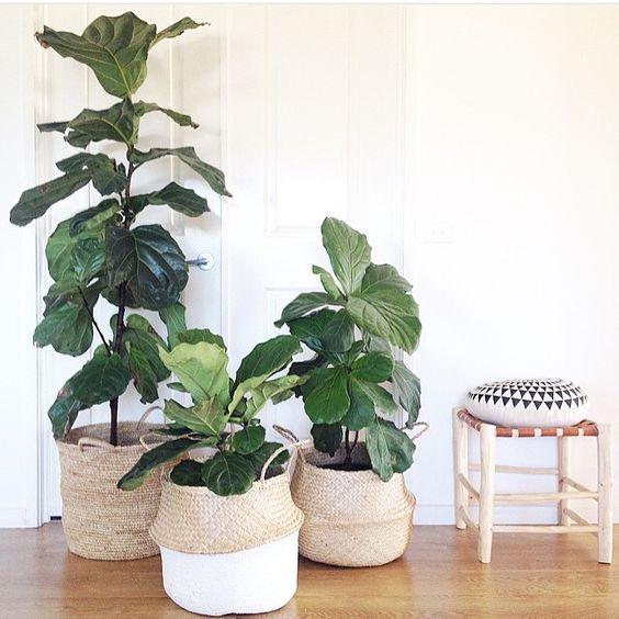 planten-in-manden-1