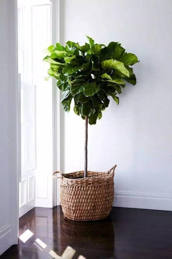 planten-in-manden-3