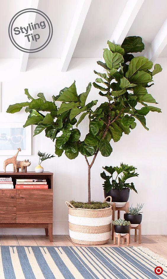 planten-in-manden-6