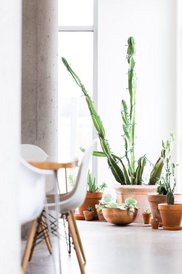 Planten in terracotta - Maison Belle