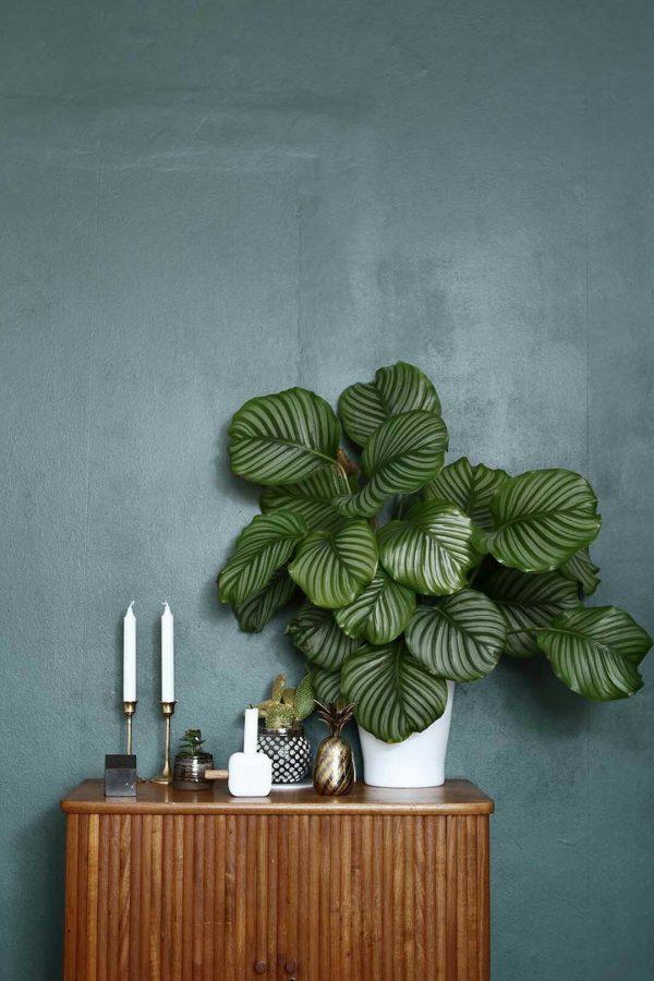 top10 planten