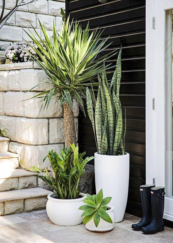 tuin ideeën planten in potten