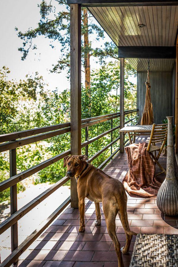 veranda huis bos