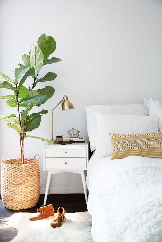 vijgenboom-in-het-interieur-slaapkamer