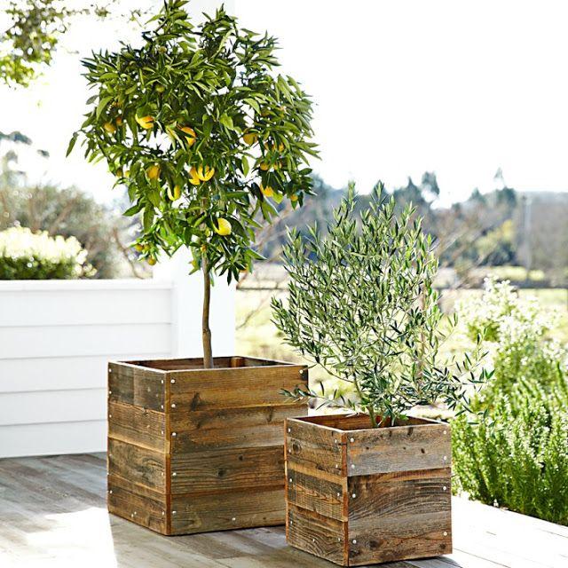 voortuin planten