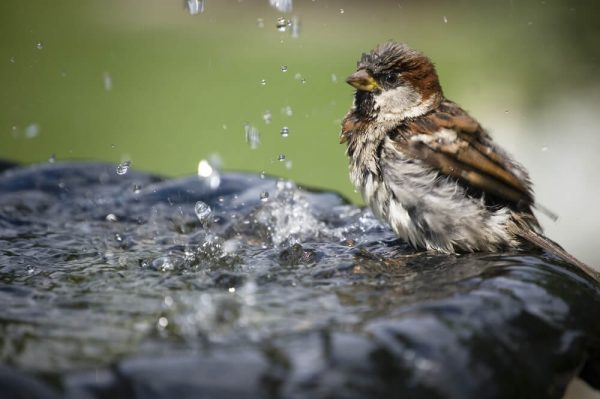waterornament vogels 2