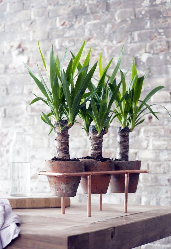 Yucca planten rek