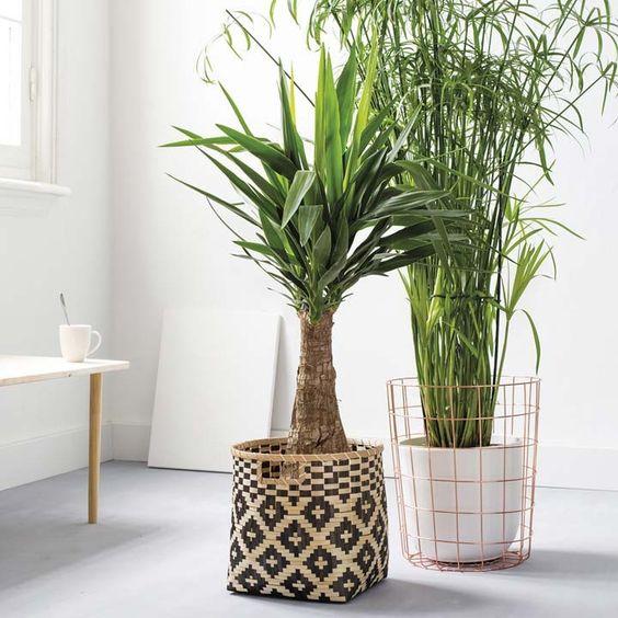 Yucca plant mand