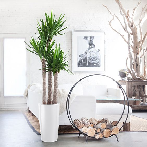 Yucca planten woonkamer