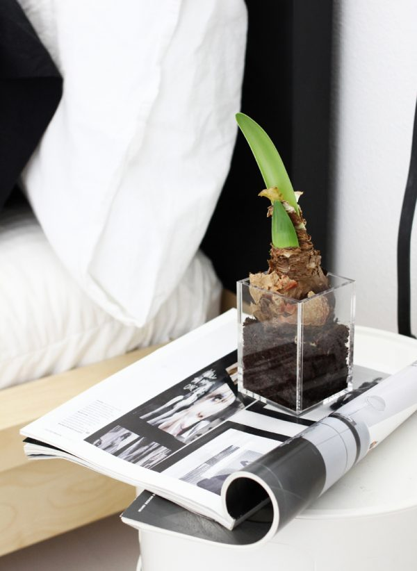 zwart-wit slaapkamer plant